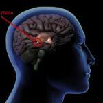 Równowaga melatoniny: detoks i wsparcie szyszynki